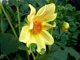 Желтенький скромный цветочек