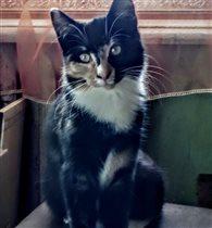 Наша новая кошка Муся.