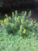 Энергия солнца жизни проявилась  в цвете цветов!