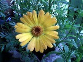 Жёлтый цветочек
