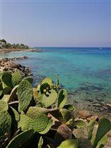 Кактус, Кипр