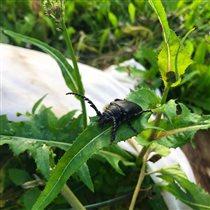 Блиц: жизнь насекомых