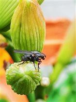 Блиц: жизнь насекомых. МУХА-ПАНК