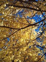 золото и небо