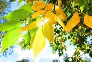 Осенний лучик