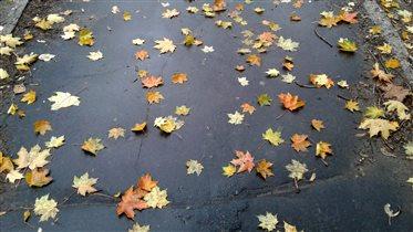 Осень под ногами
