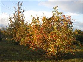 Листья жёлтые, ягоды красные
