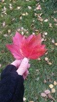 Блиц: яркая осень