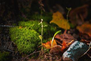Осенние былинки