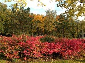 Яркая осень в Лужниках