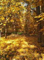 Золотая осень!