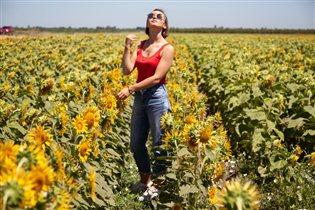 на солнечном поле