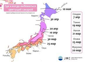 Сакура в Японии-2020: прогноз цветения