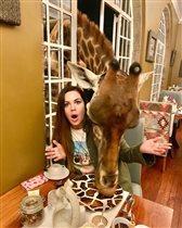 Екатерина Андреева жираф