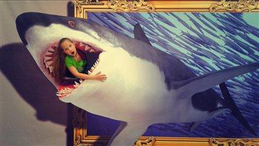 В акуле)