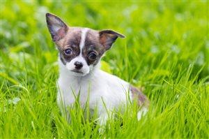 Какие ошибки чаще всего совершают начинающие собаководы