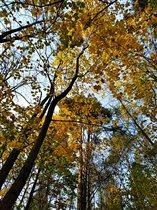 Битцевская осень