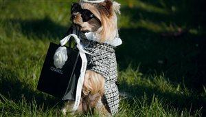 В честь каких брендов называют собак?