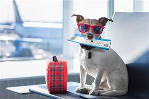 На рейсах S7 Airlines домашние животные могут летать на соседнем с хозяином кресле