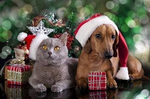 Как сделать новогоднюю ёлку безопасной для собак