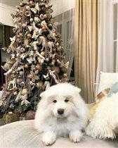 Ирина Дубцова собака умерла