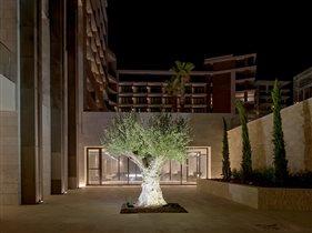 Кипр: древний город Аматус и 120-летнее оливковое дерево