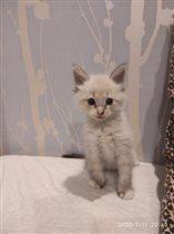 Генитиро,1,5 месяца