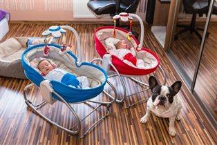 Как познакомить собаку с младенцем