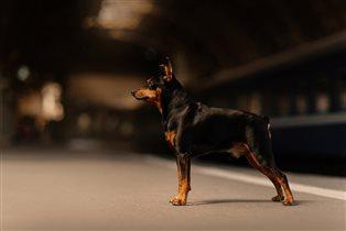 Что делать, если собака боится темноты