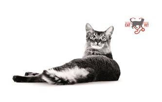 Владельцам кошек: на прием к ветеринару - бесплатно!