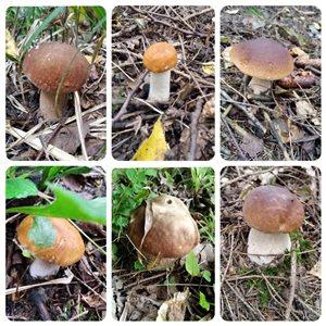 грибы :)